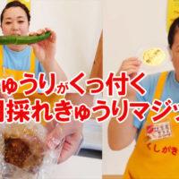 朝採れきゅうりと喰うて味噌が絶品-1024x576